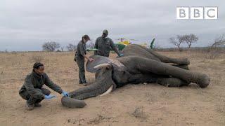 Concerned vets testing elephants for human TB | Big Animal Surgery - BBC