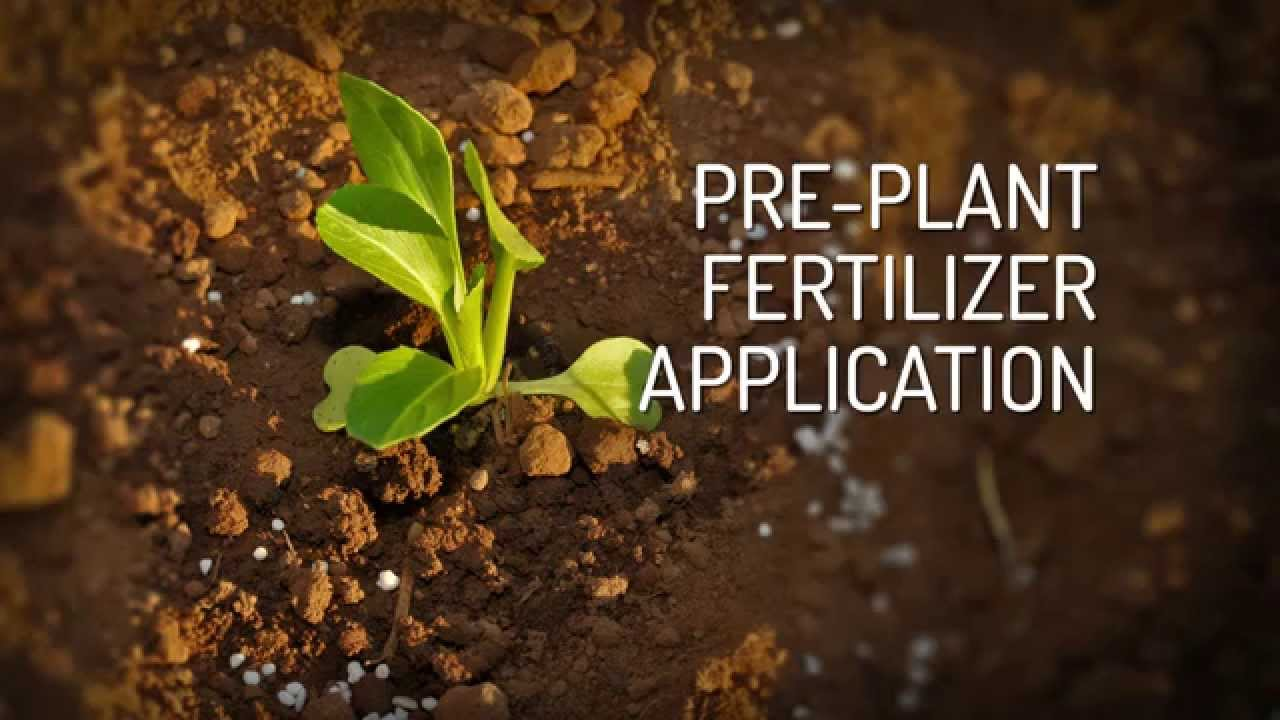 Fertilizing vegetable crops - YouTube
