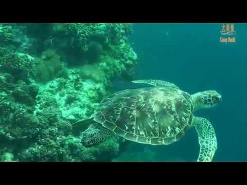 20141214菲律賓BOHOL潛水旅遊