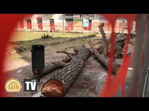 Grottaglie, abbattuti gli alberi di Pino di Piazza Verdi. Inizato il rifacimento della zona.