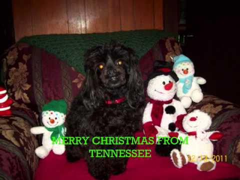 Christmas Music. Dogs Barking Jingle Bell's. Our Dog. Merry ...