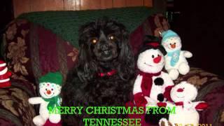 Christmas Music. Dogs Barking Jingle Bell's. Our Dog. Merry Christmas.