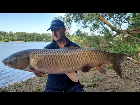 Feeder ribolov na rijeci Savi Amir Taletovic