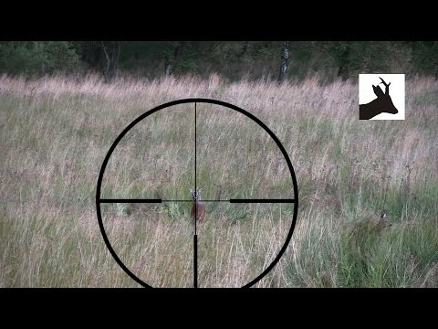 Shot placement and reaction: High neck shot