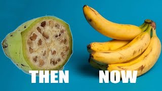 10 Foods That Look Orginally Different In Past Years || Pastimers