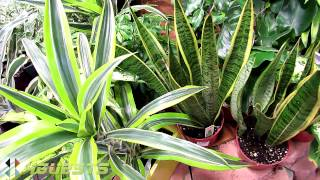 House Plants (Indoor) at Home Depot