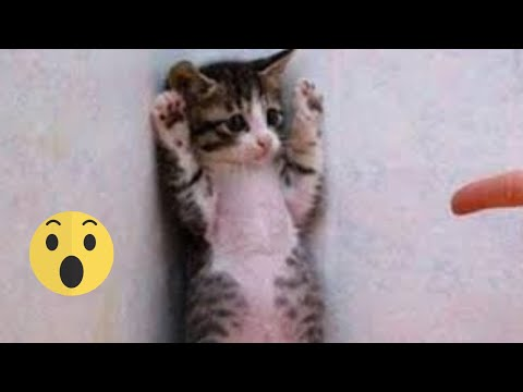 #17 😹 You can't imagine what Cat 😹 No. 12 did | Cute Cat Videos 2021