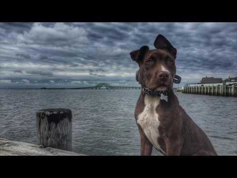 Providence Dog Trainers: Highlight Reel | Best Dog Trainers in Rhode Island