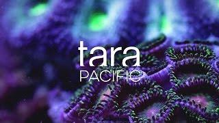 """Sciences : la goélette """"Tara"""" met le cap sur les coraux du Pacifique"""