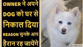 Kerala Man Abandons 3 Year Old Dog For This Stupid Reason : TUC