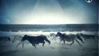 Новосибирские острова. Загадки земли мамонта ( 2013 )