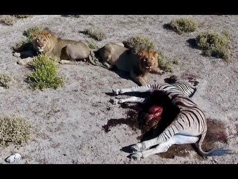 Намибия #2. Сафари. Львы съели зебру на наших глазах! Этоша.