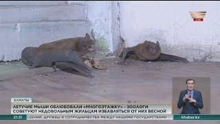Летучих мышей обнаружили в многоэтажке в Алматы