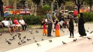Wild Pigeons Attack Food Shop in Barcelona