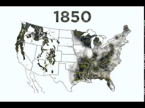 deforestation of the pacific northwest The pacific temperate rain forests lie along the western side of the pacific coast ranges along the pacific northwest coast of north america from the prince william.