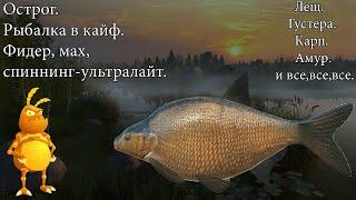 Ловим рыбку. Тестим графику. Острог. Лещ. [1440p] Русская рыбалка 4. Russian Fishing 4.