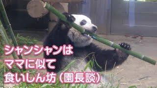 2019/6/25 食いしん坊シャンシャン^^ ママにそっくりだって? Giant Panda Xiang Xiang