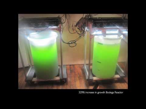 From bio-fueled robots to high-tech fashion -- algae   Amanda Parkes   TEDxPacificPalisades