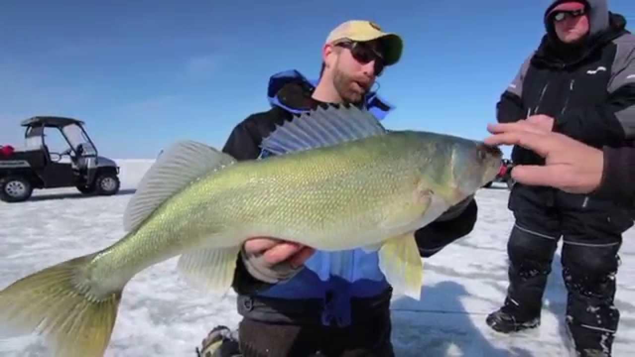 Giant walleye caught on lake winnipeg youtube for Lake winnipeg fishing report