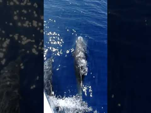 A Bordo Di Invictus I Delfini Ci Fanno Festa