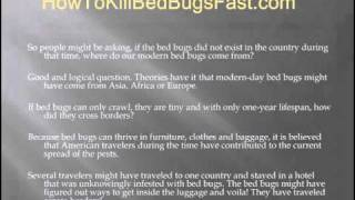 Where In The World Do Bed Bugs Come From?