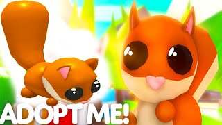 NEW Red Squirrel Pet in Adopt Me