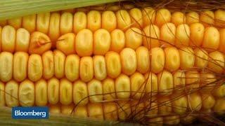 Ethanol Usage Up Despite Oil Price Drop: Green Plains CEO