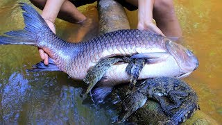 Unbelievable! Babies Crocodile In Biggest Fish Stomach Then Cooking Babies Crocodile Fried In Forest