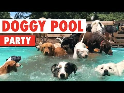 Doggy Pool Party | Clip of the Week