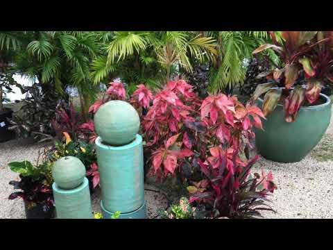 Living Color Garden Center in Fort Lauderdale