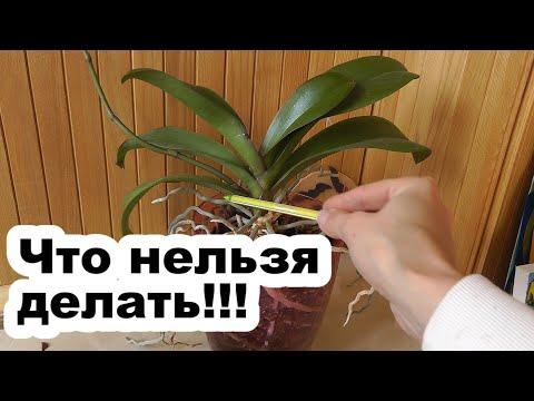 История моей второй орхидеи или 5 ошибок новичков
