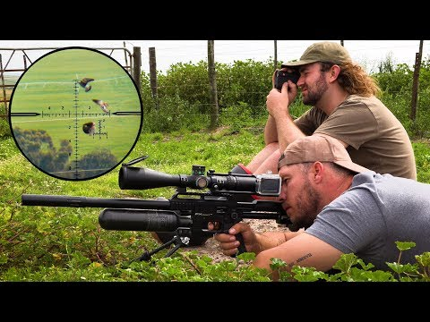Crazy Long Range Pigeon Hunting!