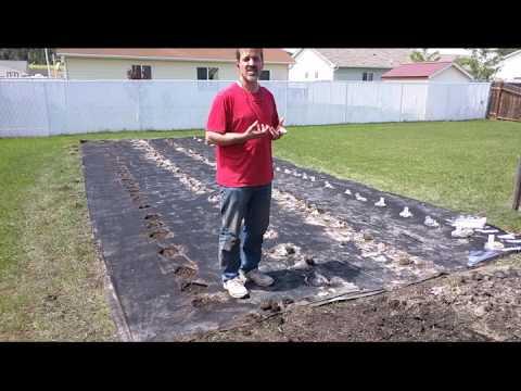 Growing Food with Trash - Begin Test
