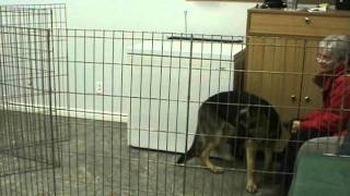 Actt Dog Fear, Aggression, And Behaviour Modification Case Study Series