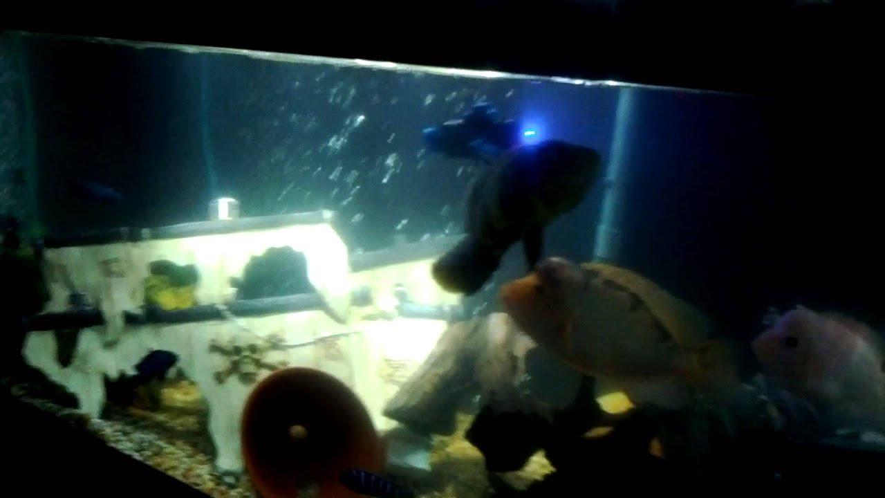 Rc submarine review for fish tank or aquarium youtube for Fish tank camera