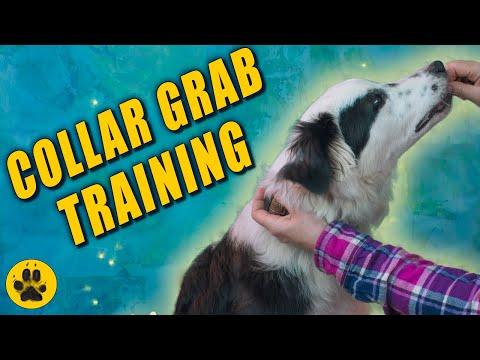 Collar Grab Dog Training