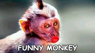 Funny Monkey videos - Смешные обезьяны - Подборка приколов