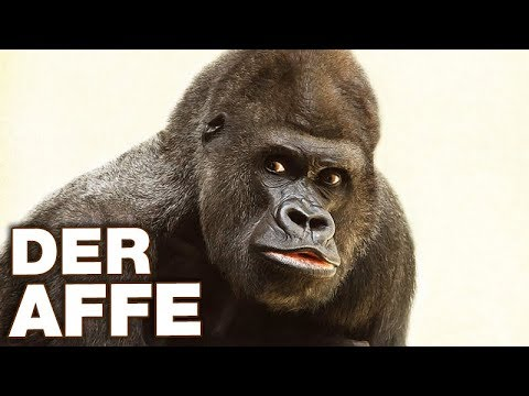 Der Affe - Anatomie und Biologie   Alternative Fakten fürs Referat ...