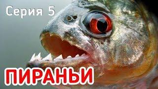 ПИРАНЬИ СЪЕДАЮТ ОКУНЯ! Приключения! Фидерная рыбалка. Серия 5