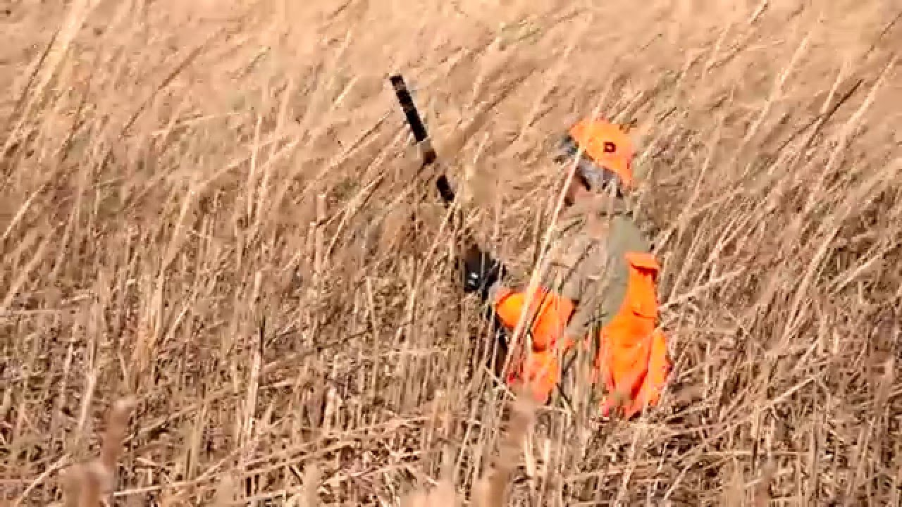 Image Result For Field Dressing A Pheasant