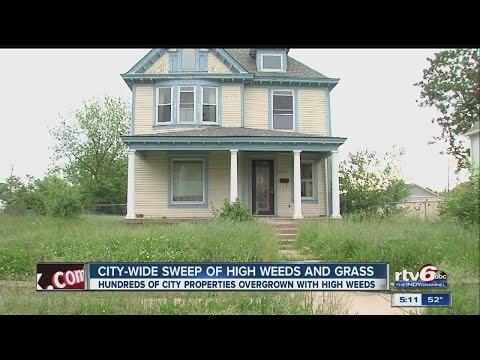 Yes, you can be fined for having overgrown weeds in your lawn