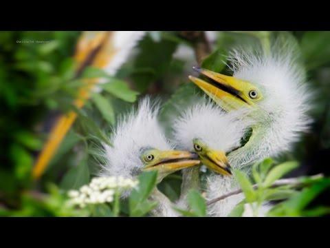 Merritt Island Birds & Wildlife