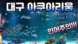 [대구 가볼만한곳]신세계백화점 대구아쿠아리움