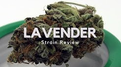 Lavender Strain Review - ISMOKE