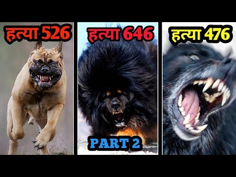 MOST DANGEROUS DOG BREED IN THE WORLD / Part 2 / Dangerous dog breeds