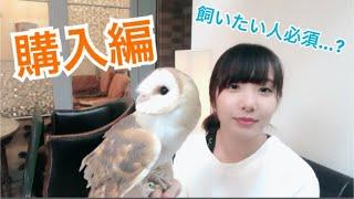 フクロウ #owl ふくろうのかわいい動画をあげています チャンネル登録お...