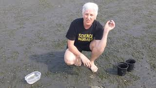 The Science of Sandcastles