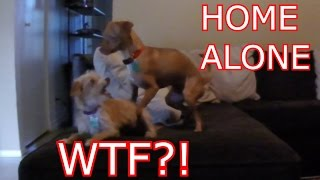 What Dogs Do When You're Not Home thumbnail