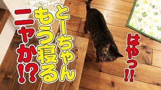 毎晩夜更かしする猫達をいつもより早めに寝室へ誘ってみた! thumbnail