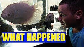 what-happened-in-the-aquarium-gallery-this-week